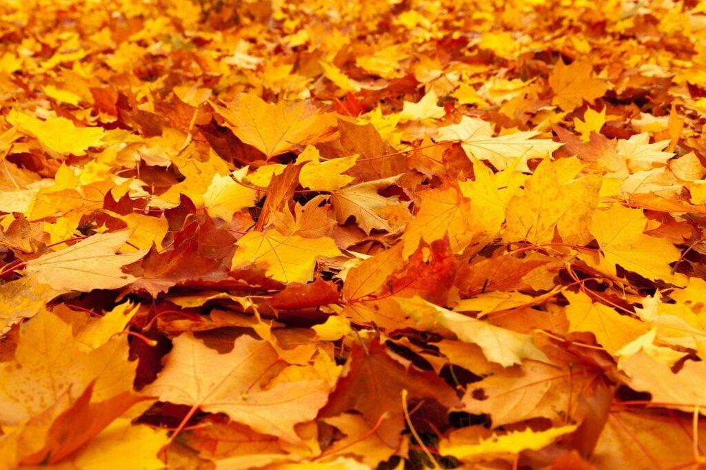 autumn, leaves, hösten, perfekt tid, organisera tidrapporteringen